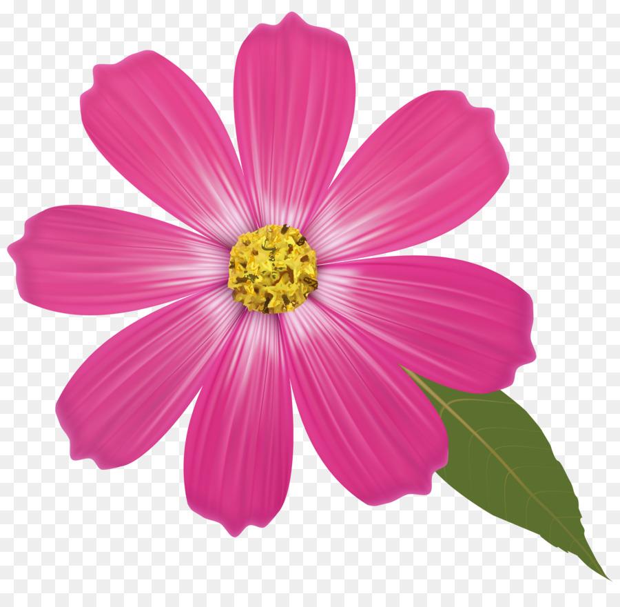 Цветы в картинках отдельно