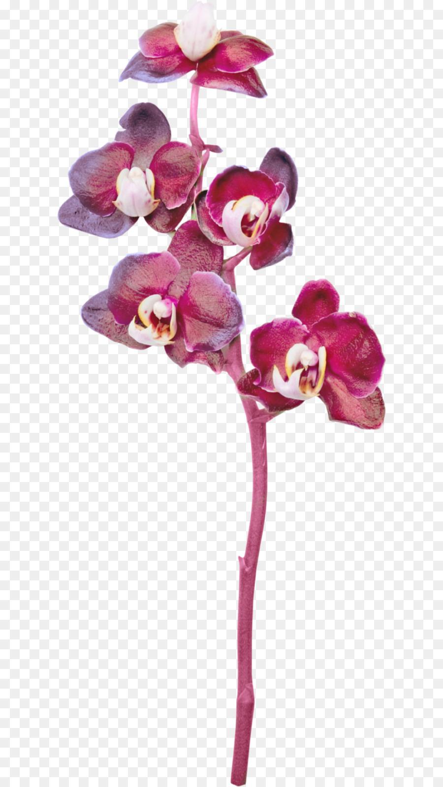 Срезанный цветок орхидеи