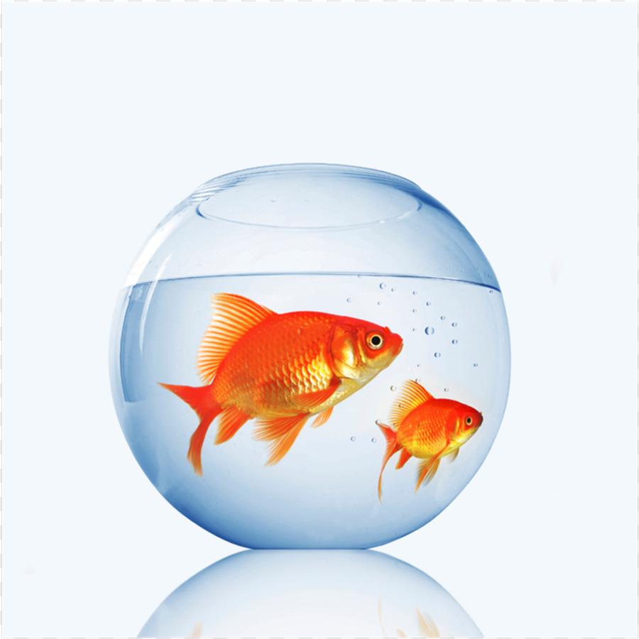 Рыбка золотая в аквариуме картинка для детей