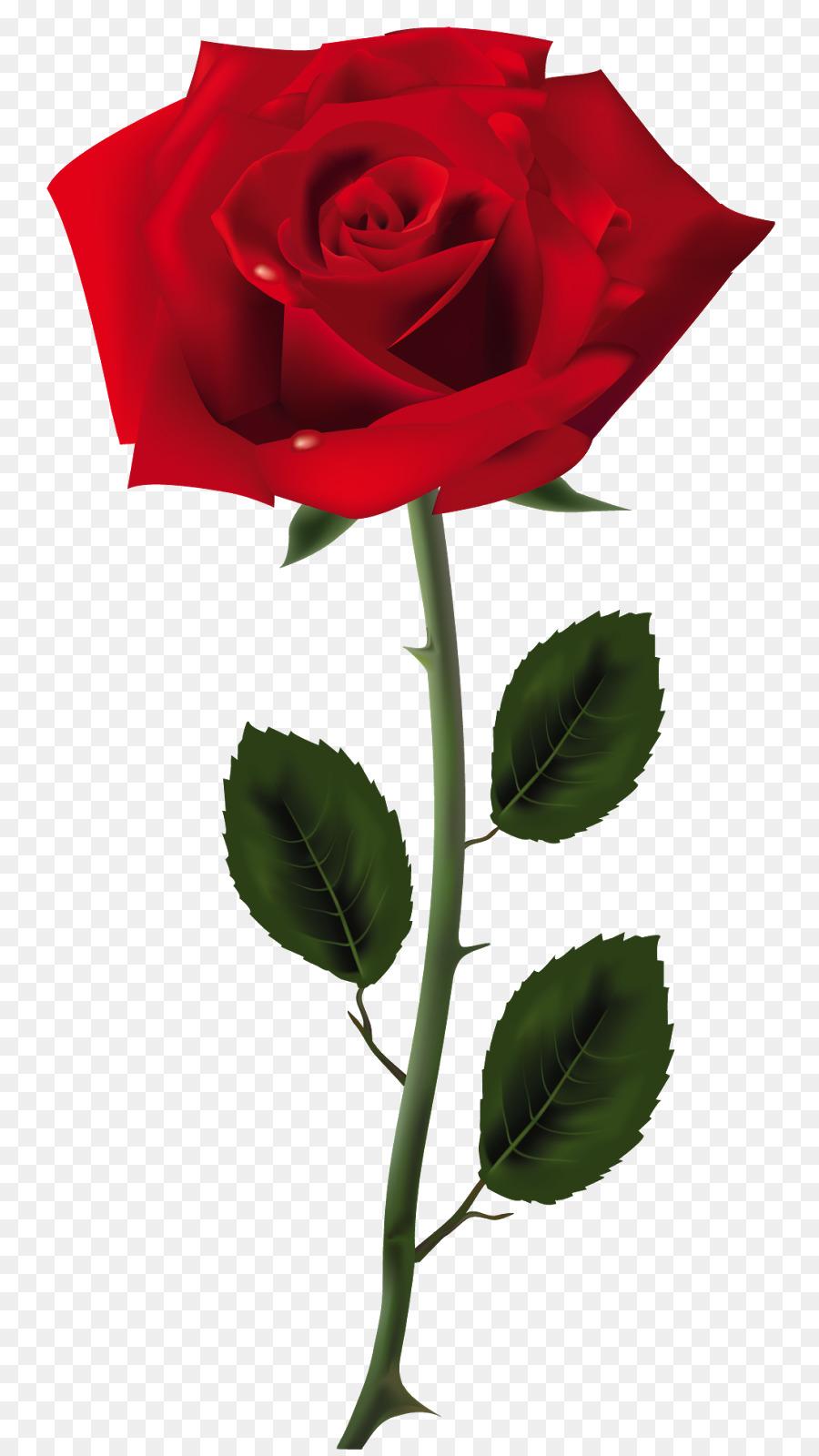 Картинка роза красная на прозрачном фоне