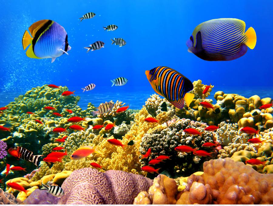 Нежными, рыбы коралловых рифов картинки с надписями