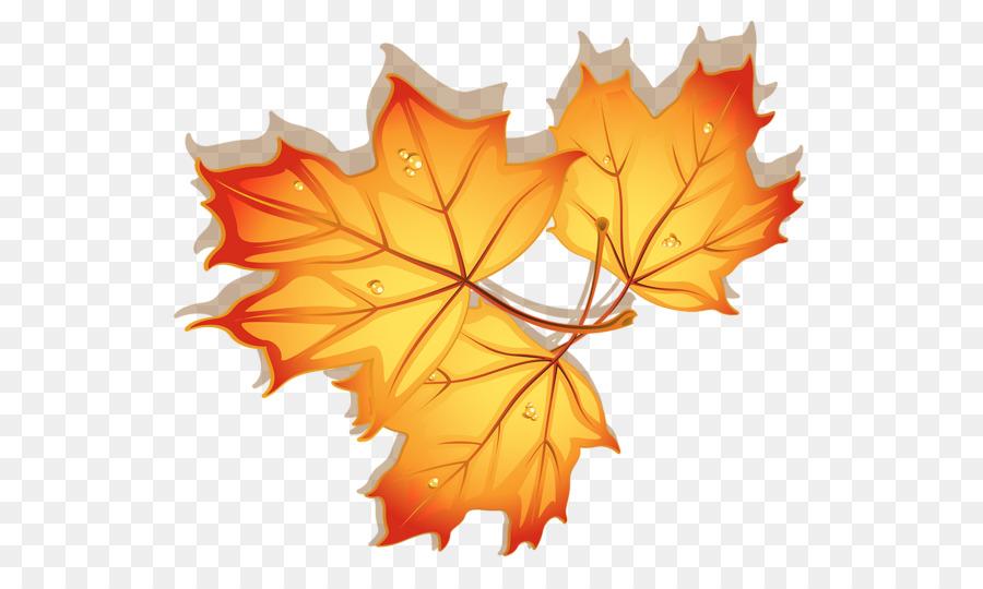 Картинки кленовые листочки осенние