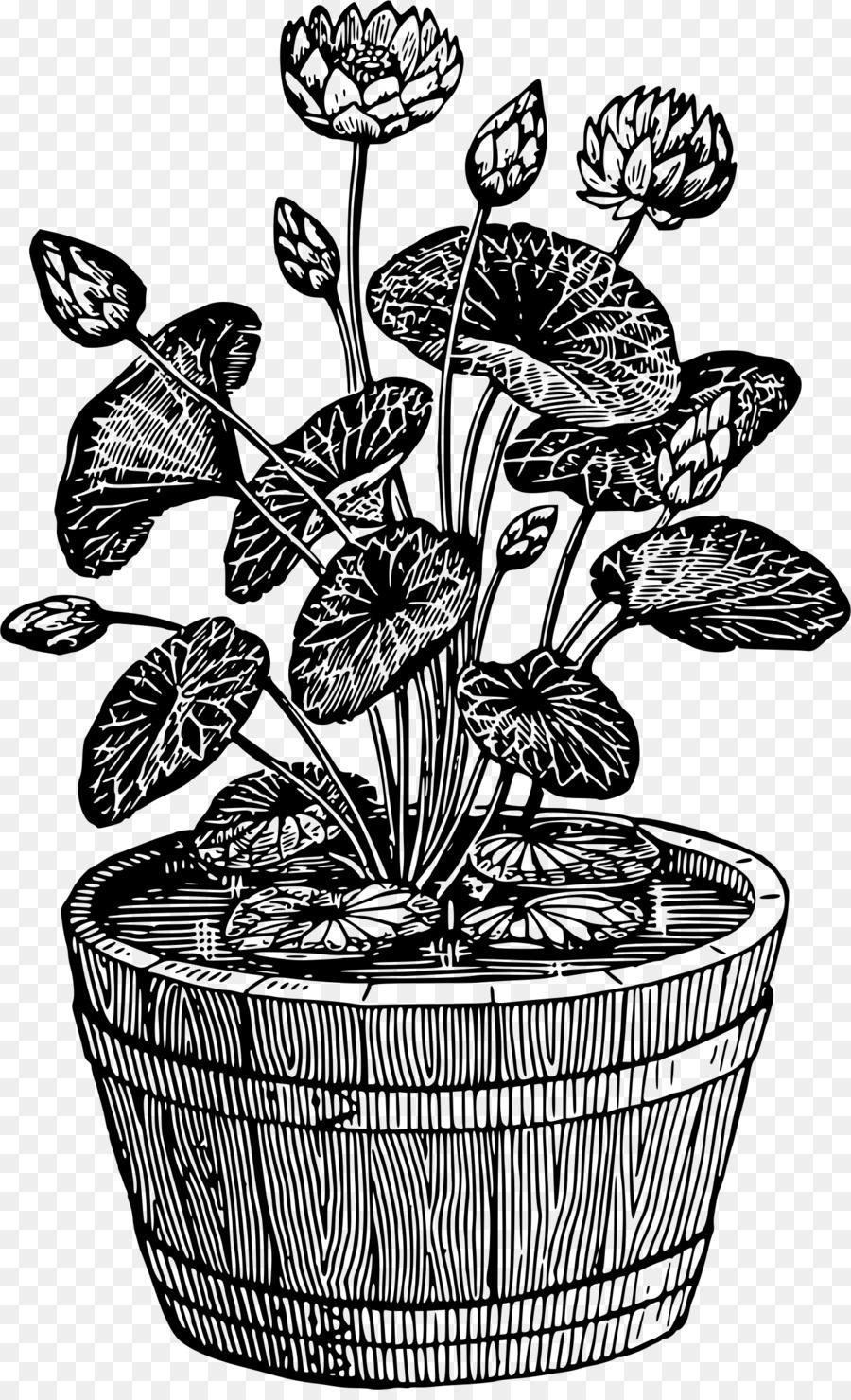 бабо поводу рисунок комнатные растения купить кованый