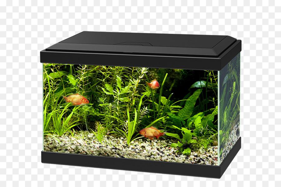 параллелепипедные аквариумы картинка фото хорошо видно