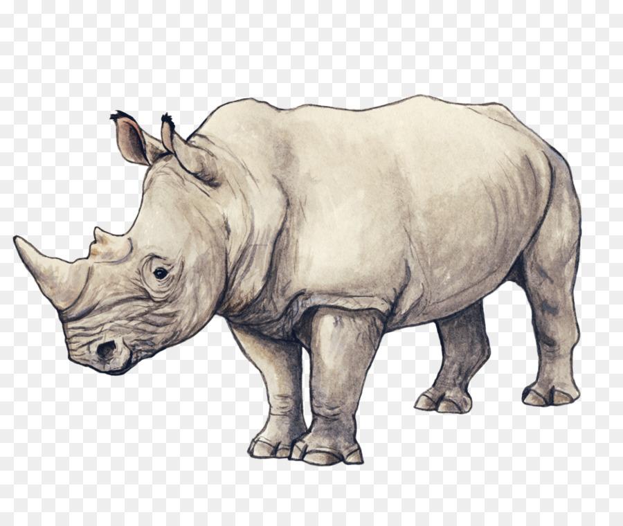 носорог картинки рисунки