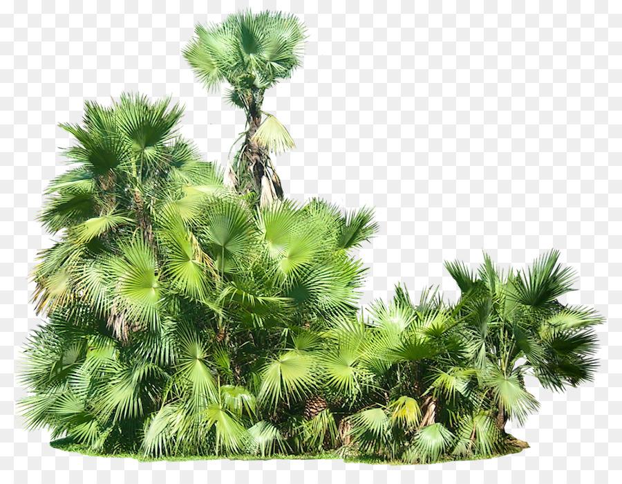 тропический лес картинка на прозрачном фоне ирина способна