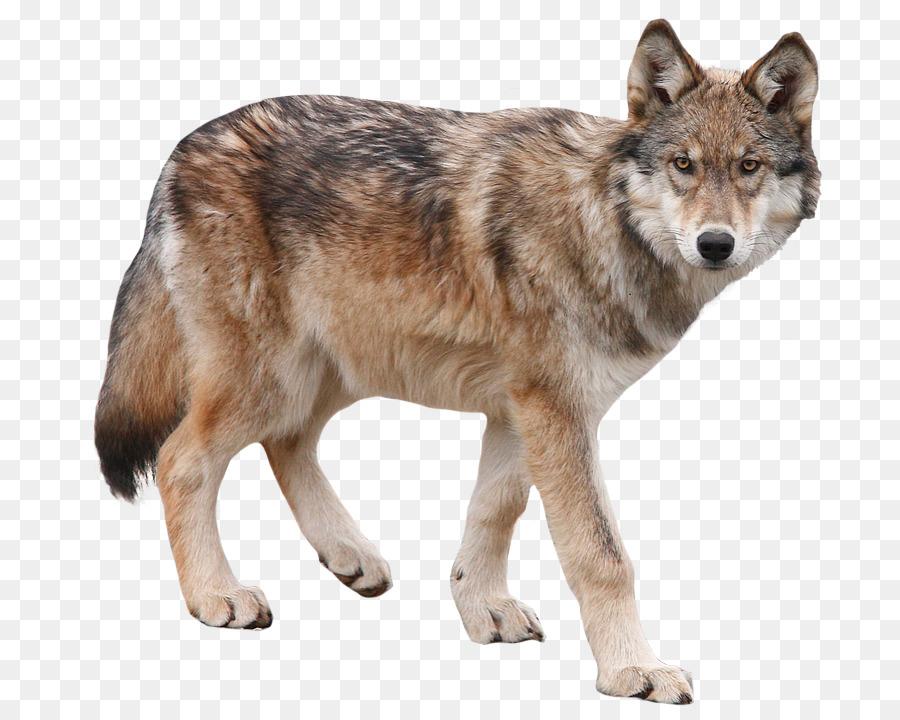 картинка детям волк