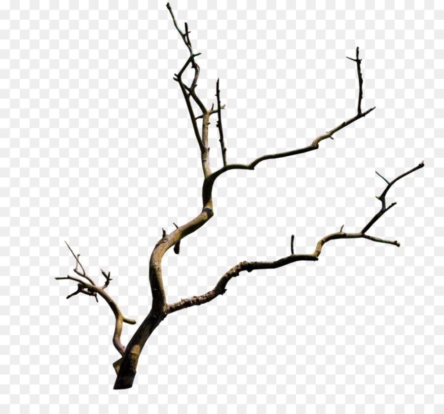 Ветки деревьев рисунок