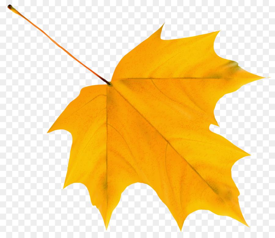 Картинка желтого листка