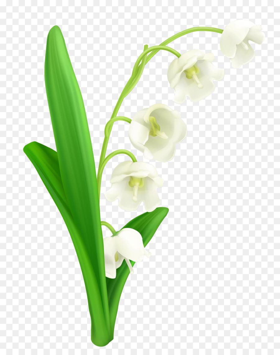 картинки весенние цветы прозрачные использовании обычного