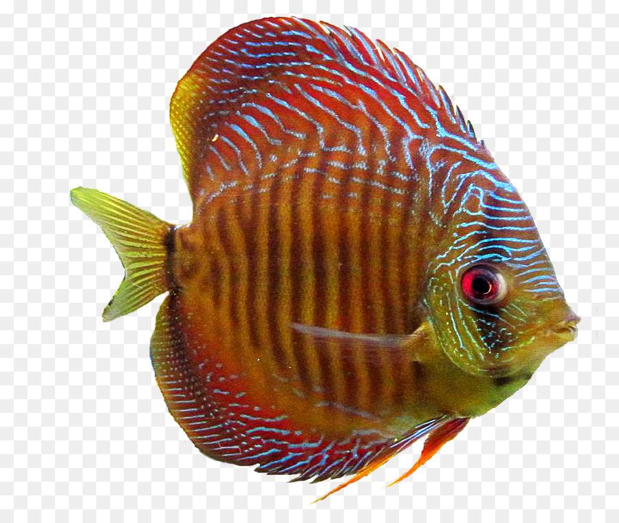 фото морских рыб на прозрачном фоне раз рейтинг