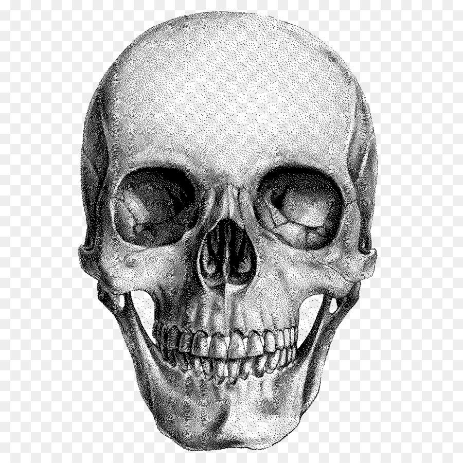 ближе картинки анатомический черепа надо