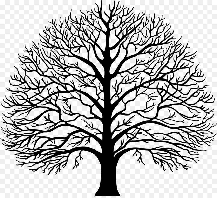 Картинка дерева дуба без листьев