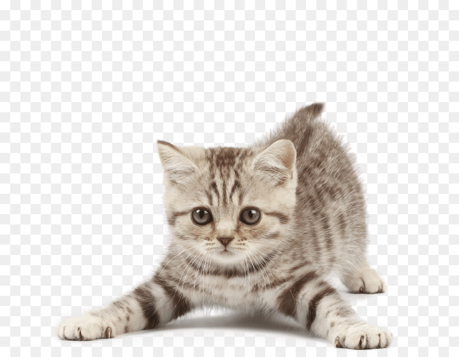 Котики картинка с прозрачным фоном