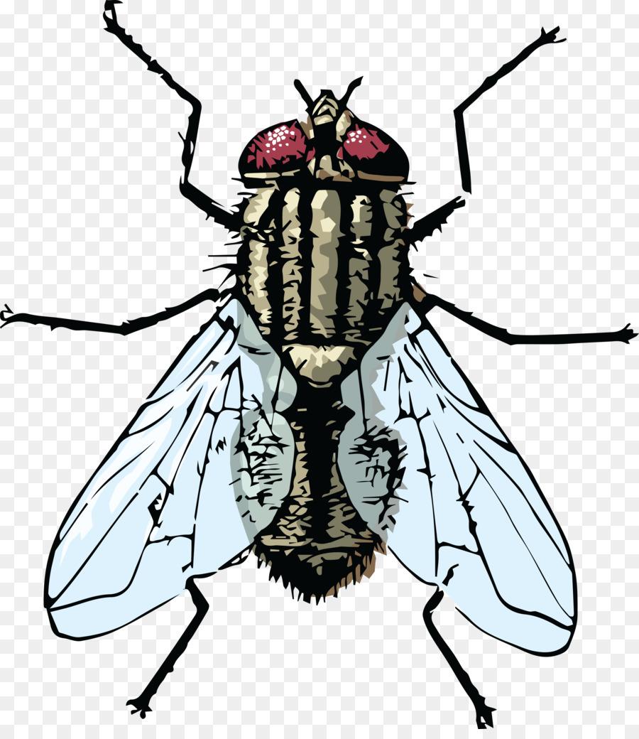 Картинки мух нарисованных