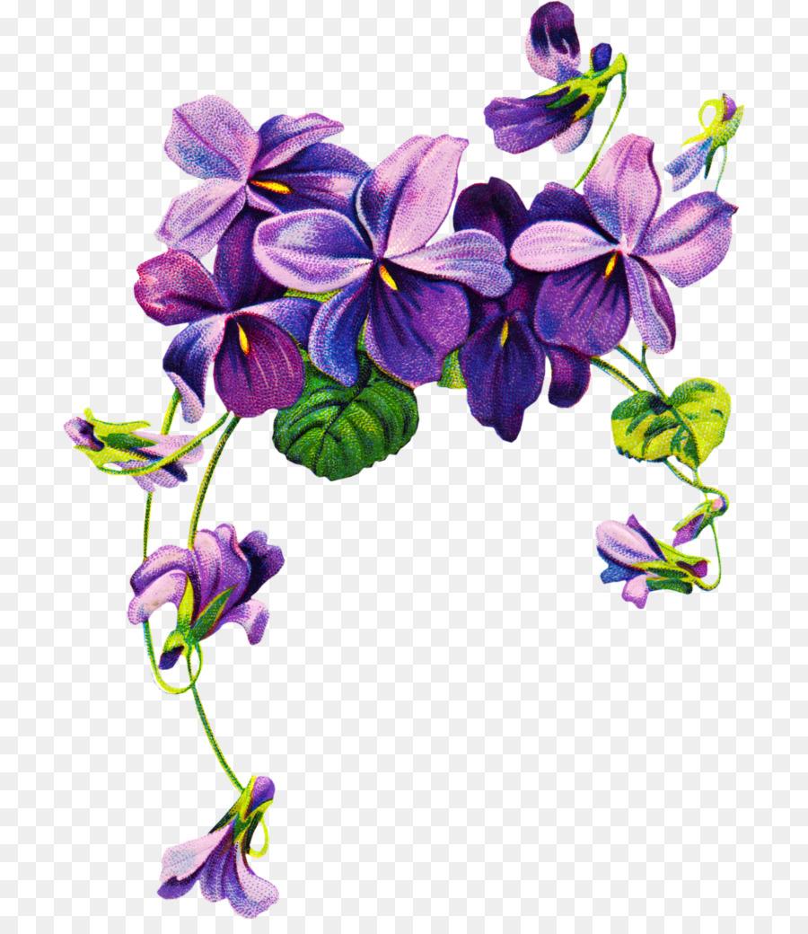 Незнакомки красивые, сиреневые цветы картинки на прозрачном фоне
