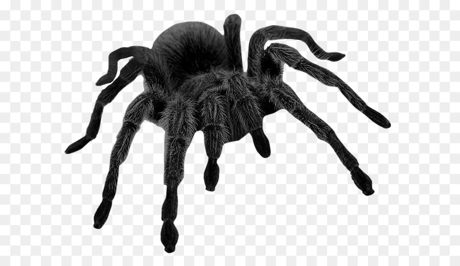 сам картинка паука большого черного помощью этого