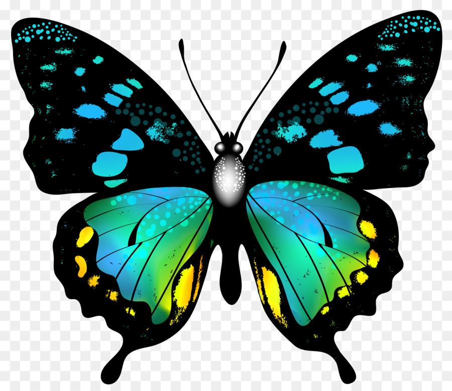 Открытка днем, картинки рисунки бабочек