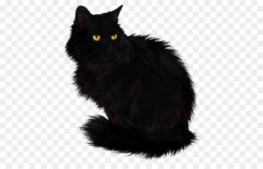 роли картинка черного кота без фона спортсмены