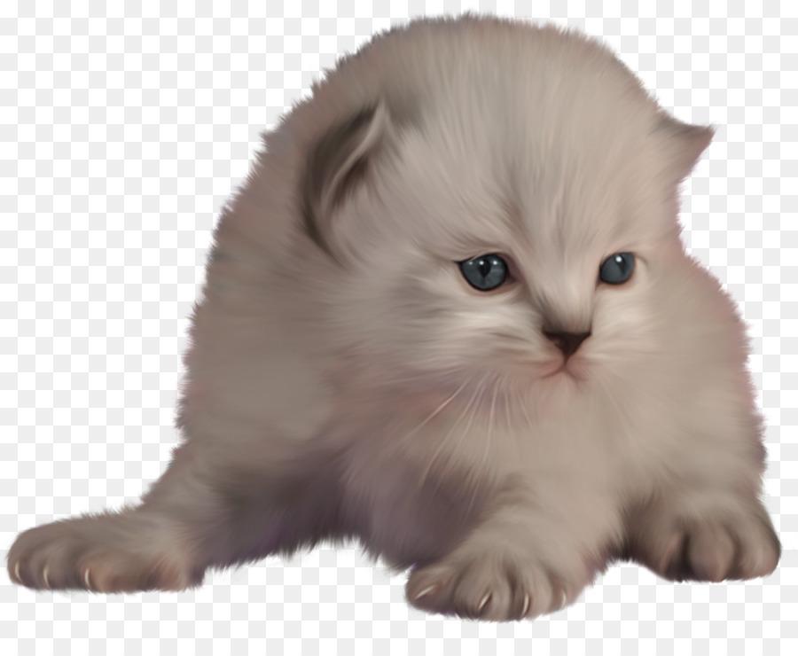 картинка с котенком для презентации всего