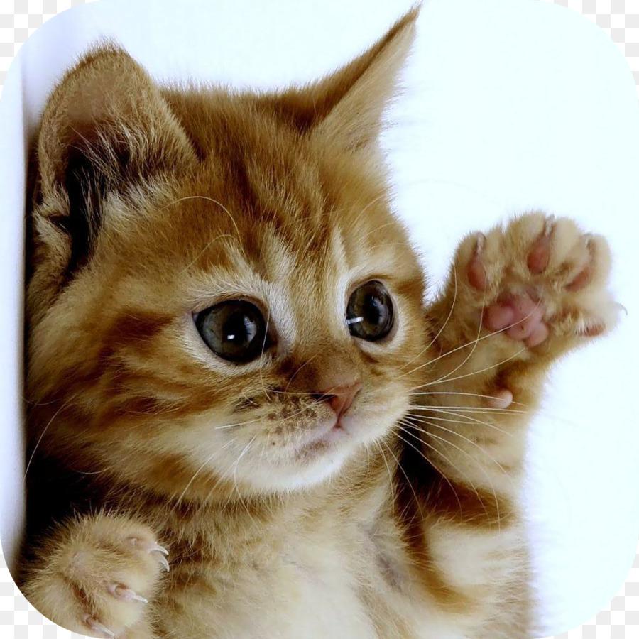 картинки котенок машет публикацию это вам