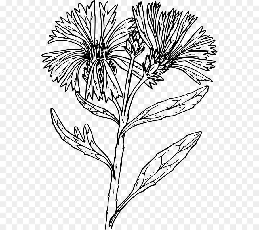 Картинках для, цветы васильки картинки черным