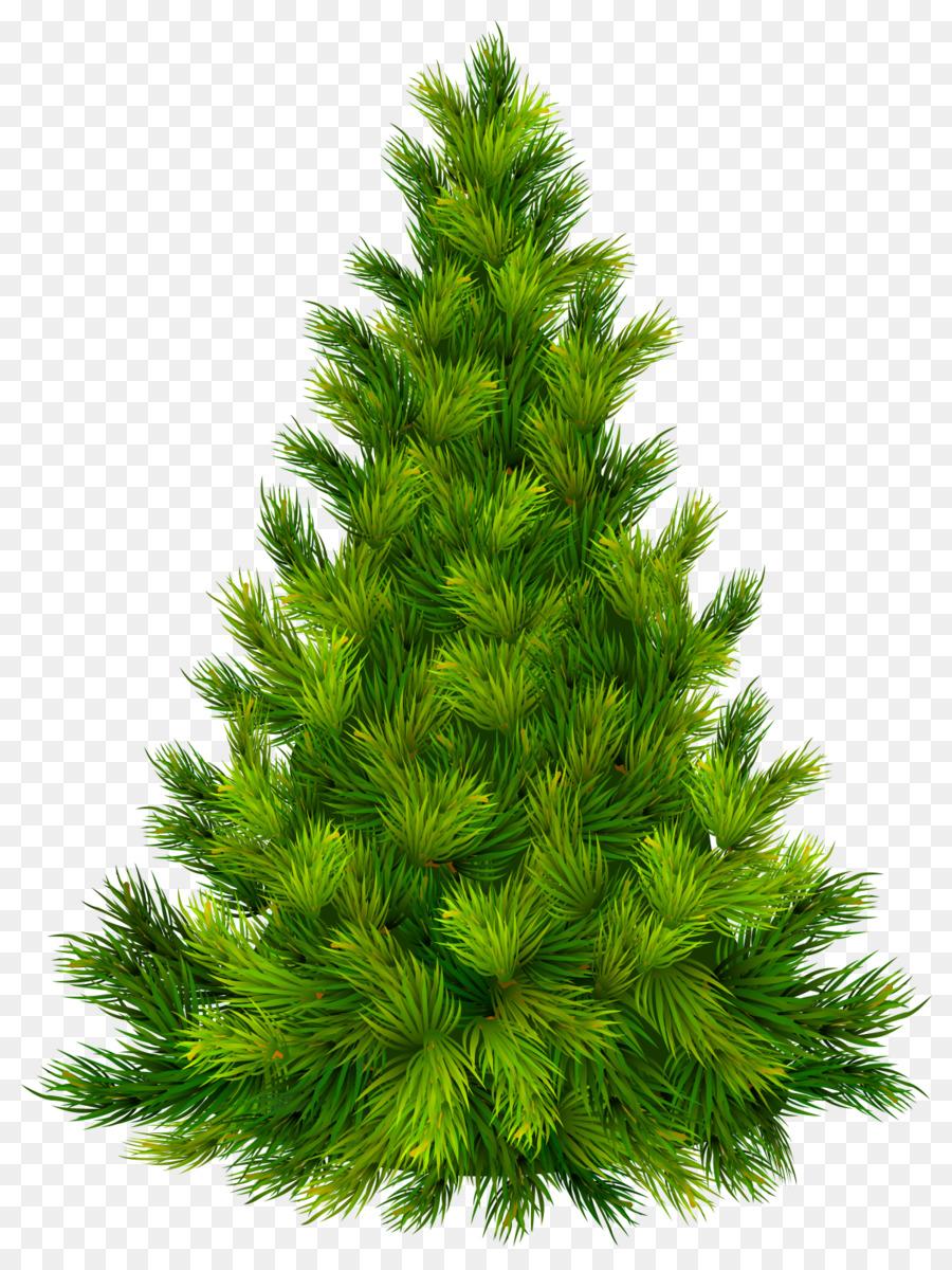 итальянский картинка елка прозрачный фон держит