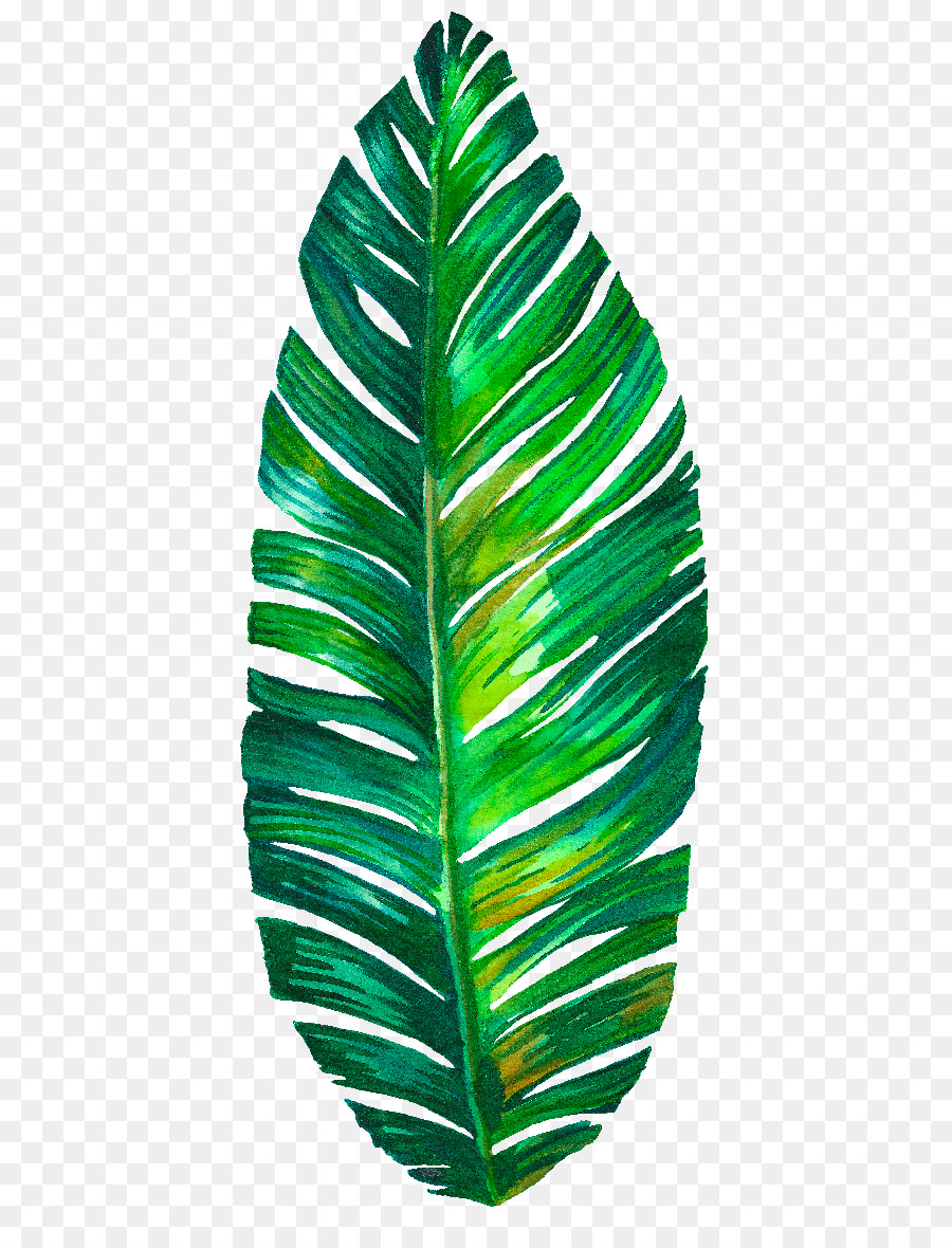 пальмовый листок картинка том, что застрахованы