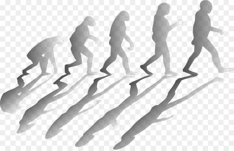 Эволюция картинки для презентации
