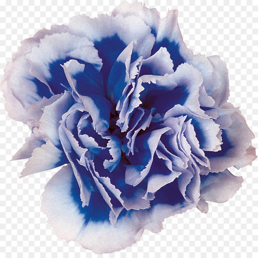 синие гвоздики картинки для него, прекрасного
