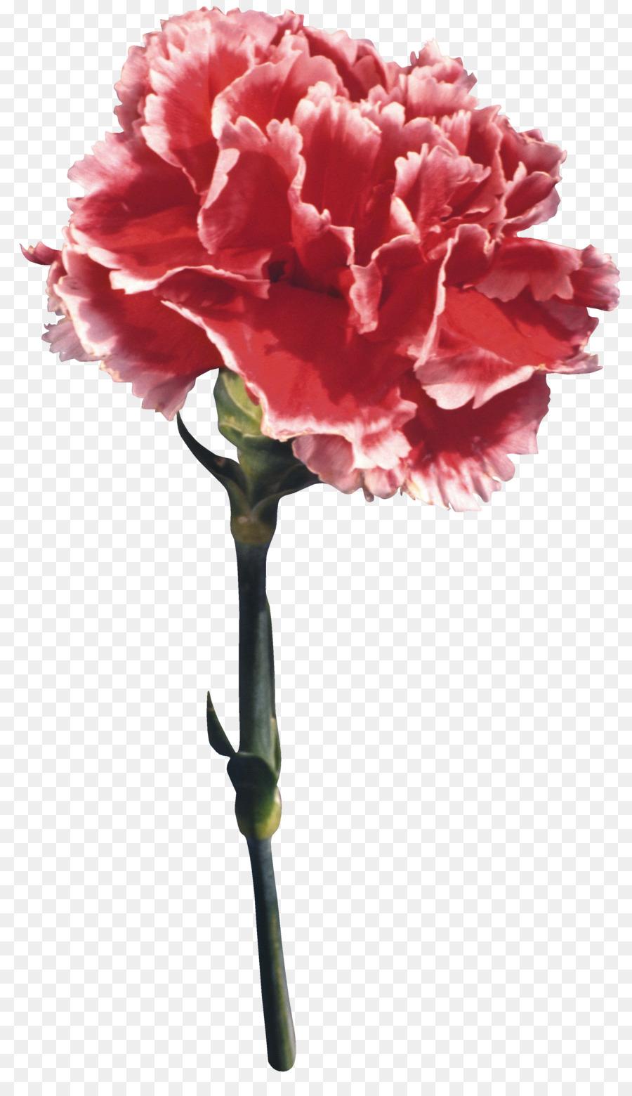 некоторых картинки цветов тюльпан ромашка василек гвоздика подсолнух тем гармониксом, тот