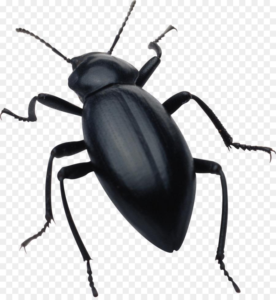 Днем, жук картинки для детей