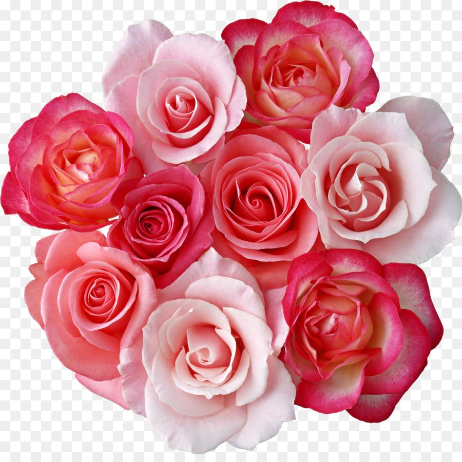 розовые розы фото на прозрачном фоне белые фоны