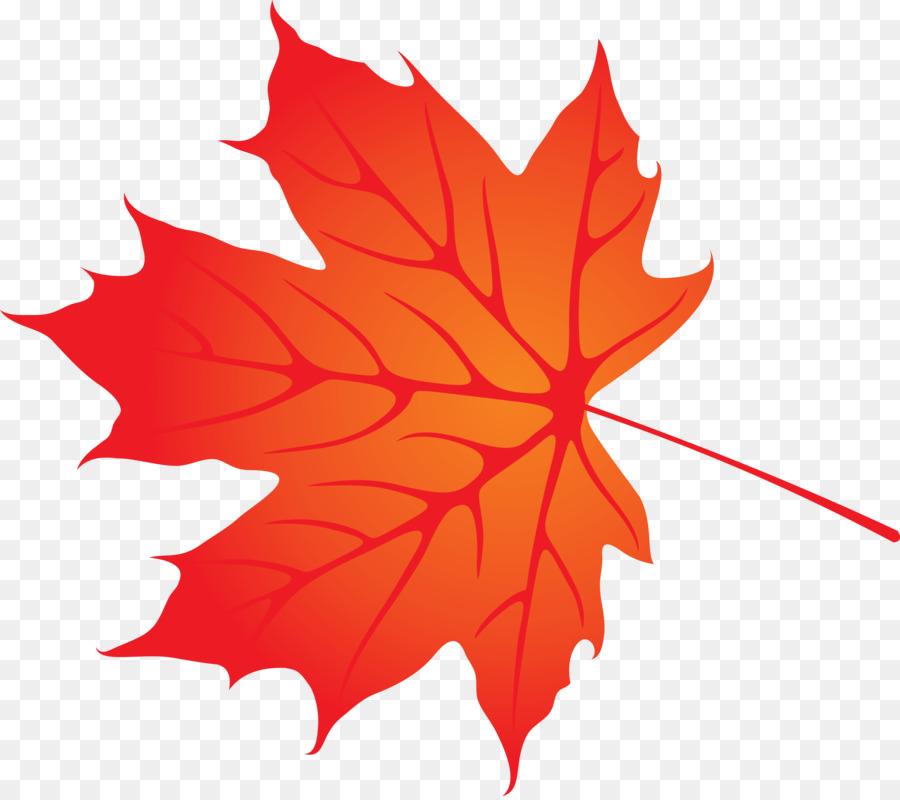 Оранжевый кленовый лист картинки