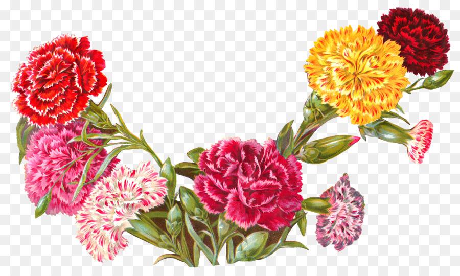 картинки гвоздики цветы для фона открытки интимную пластику