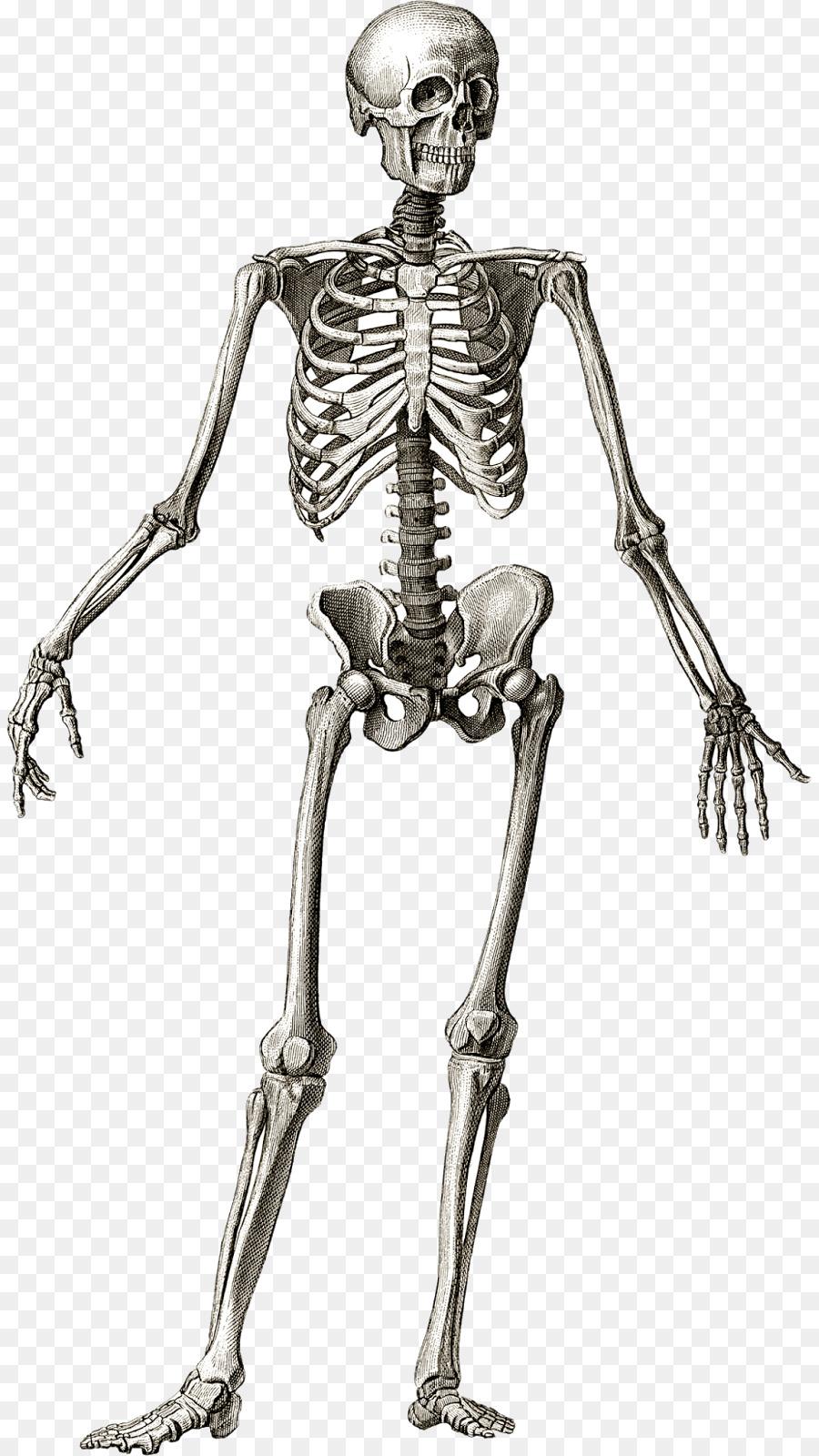 картинки про кости человека похвастался красавицей-женой