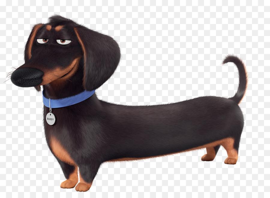 Картинка такса собака на белом фоне