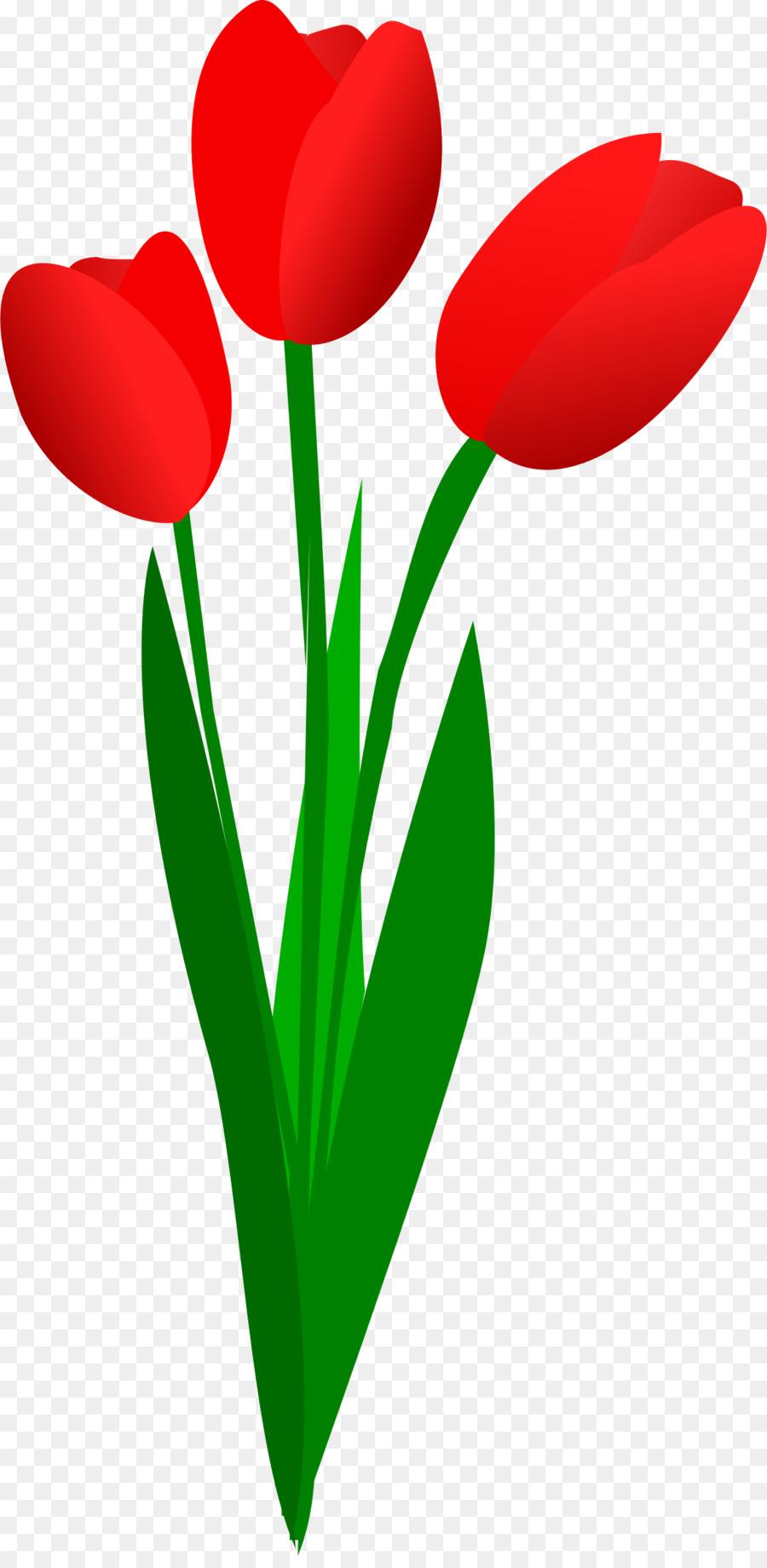 Букет тюльпанов картинки для детей, мая плюс минус