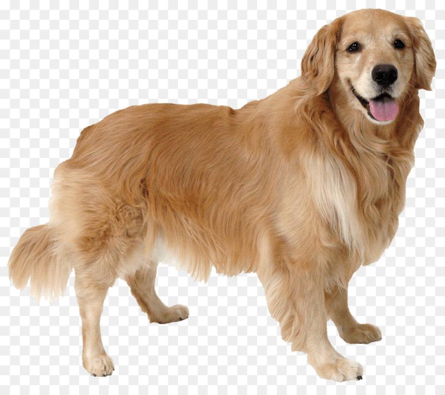 Картинки домашние животные собака для детей