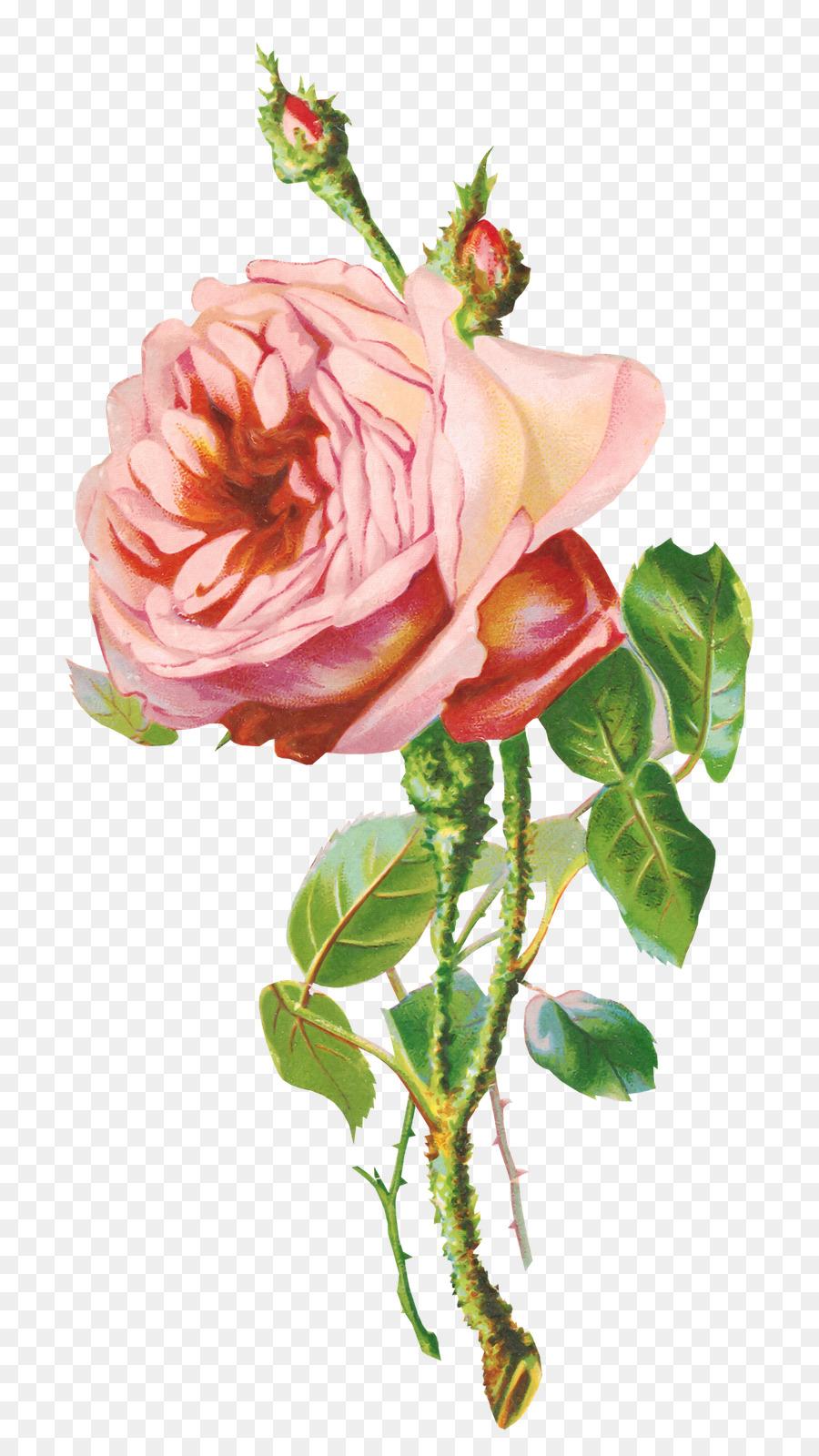 Открытка с веткой розы