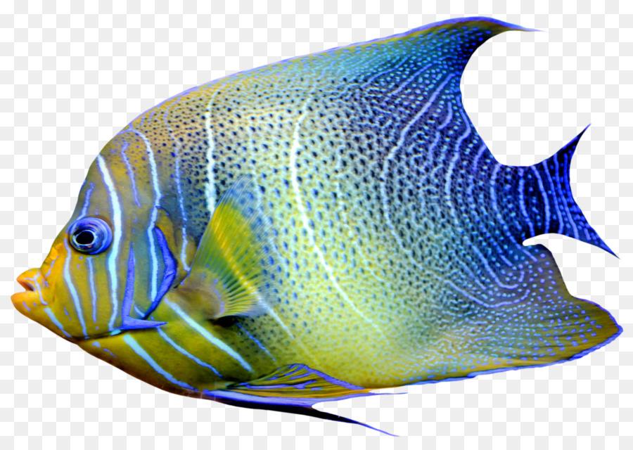 Португалии, рыба картинка на прозрачном фоне