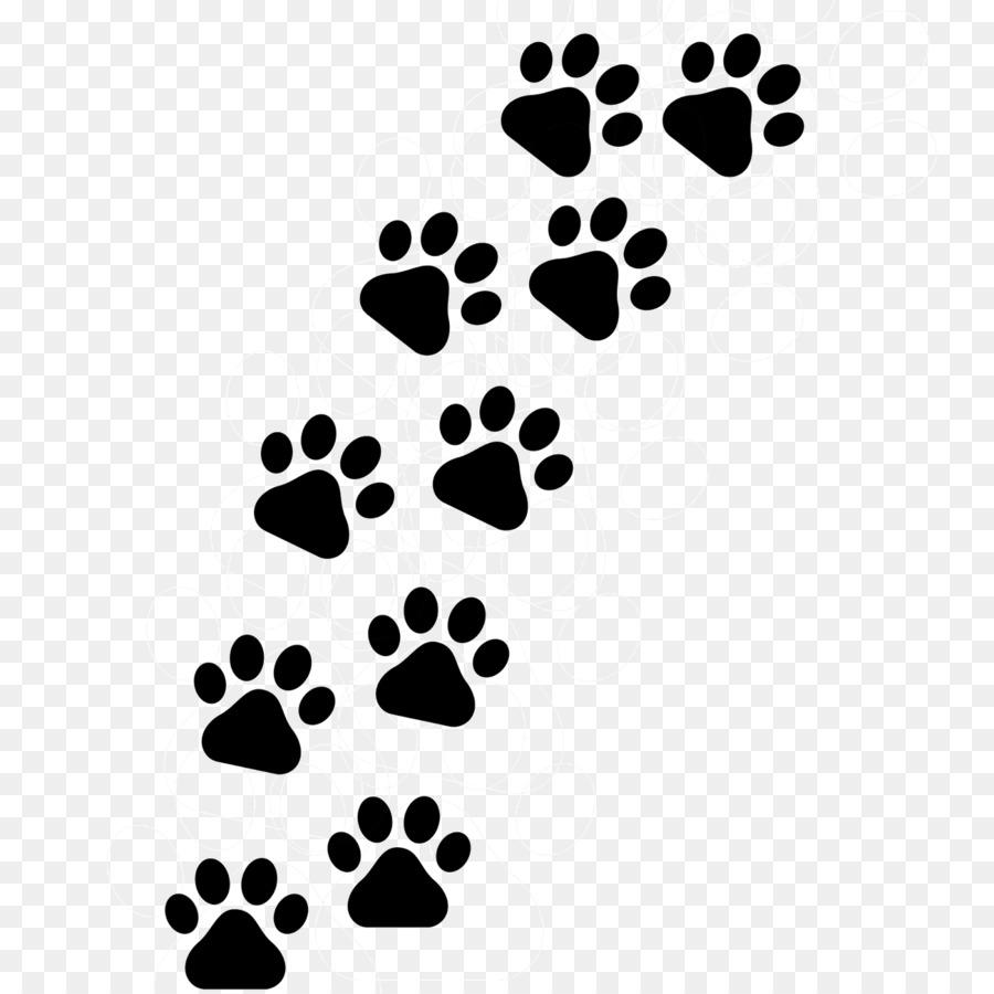 картинки лапок кошек гкл