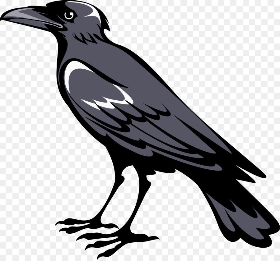 Картинки ворона без фона