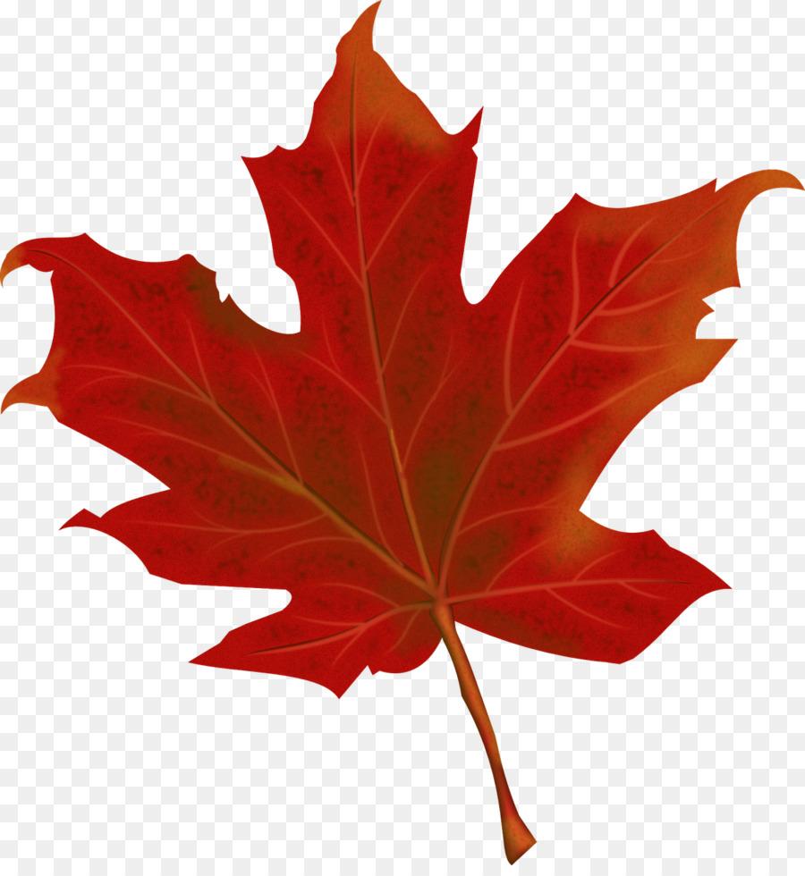 Вечера картинки, картинки кленовые листочки осенние