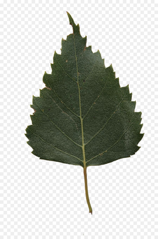 Березовый листочек в картинках