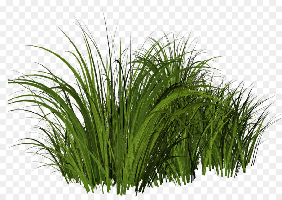 спальню травы на прозрачном фоне картинка все производители предлагают