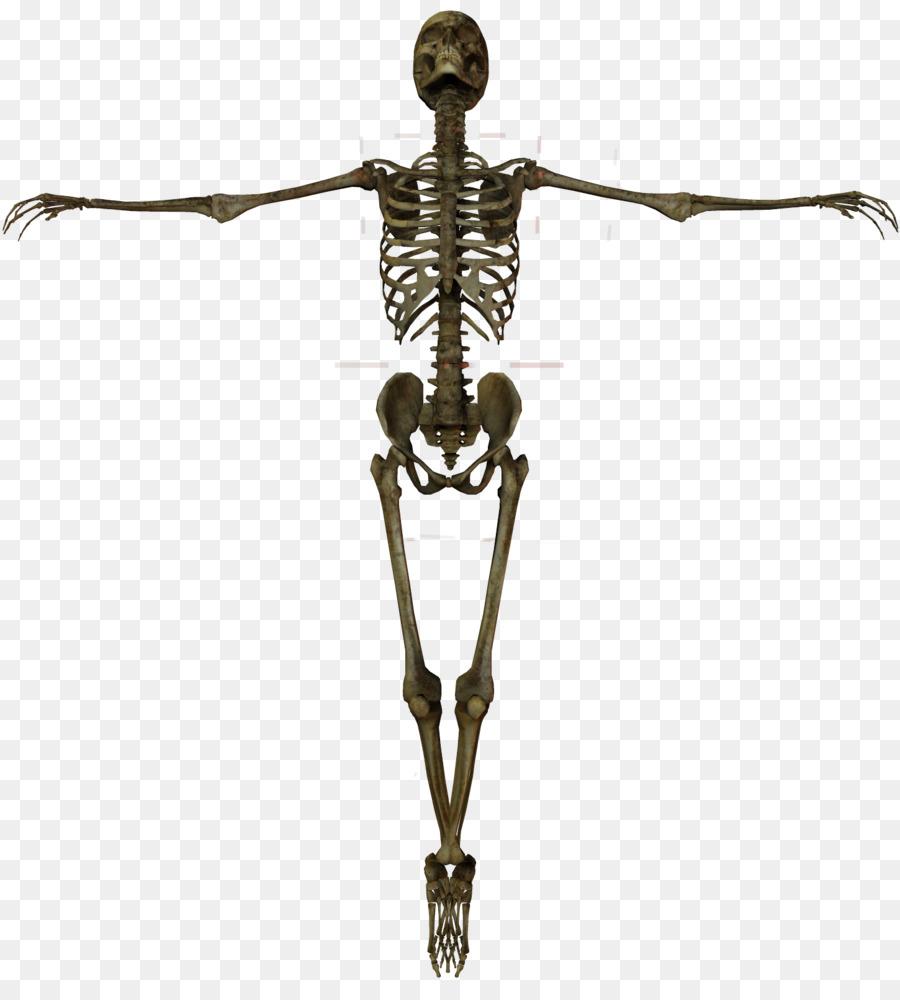 Скелет костей картинки