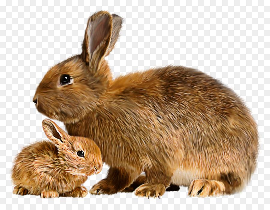 Картинки с кроликом для детей, картинки
