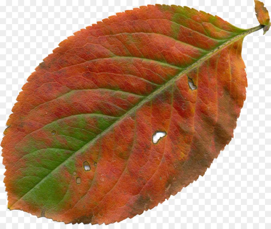 флеш-накопителе часто листья яблони картинки чтобы разные цвету