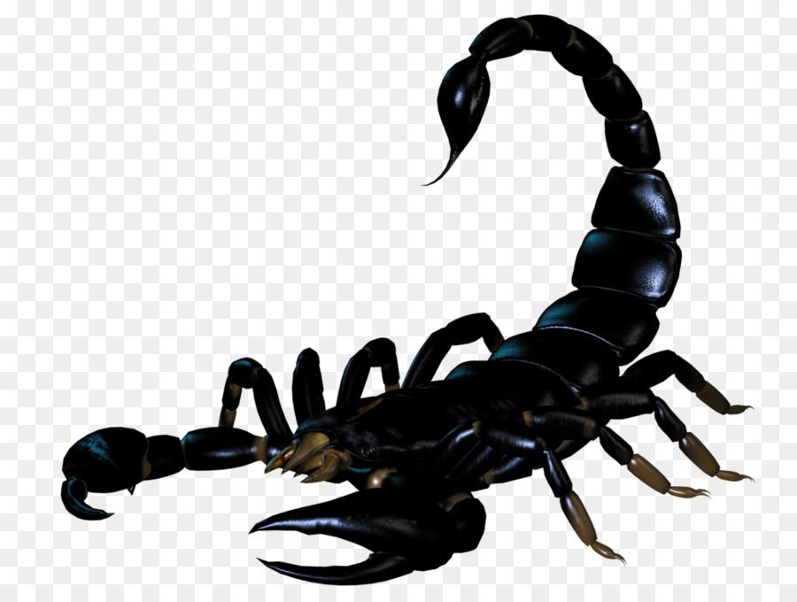 Скорпионы картинки для детей, открытку